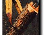 Holzgreifer