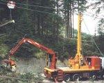 eine Seilbahn, Bäume werden hangabwärst gezogen und am Ende aufgearbeitet