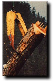 Holzgreifer beim Heli-(kopter)-Logging